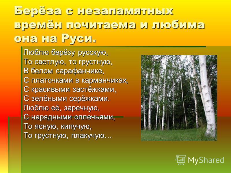 Берёза с незапамятных времён почитаема и любима она на Руси. Люблю берёзу русскую, То светлую, то грустную, В белом сарафанчике, С платочками в карманчиках, С красивыми застёжками, С зелёными серёжками. Люблю её, заречную, С нарядными оплечьями, То я