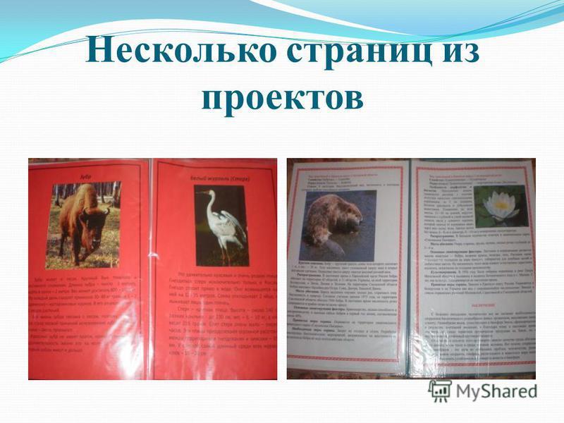 Несколько страниц из проектов