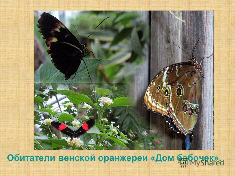 Обитатели венской оранжереи «Дом бабочек».