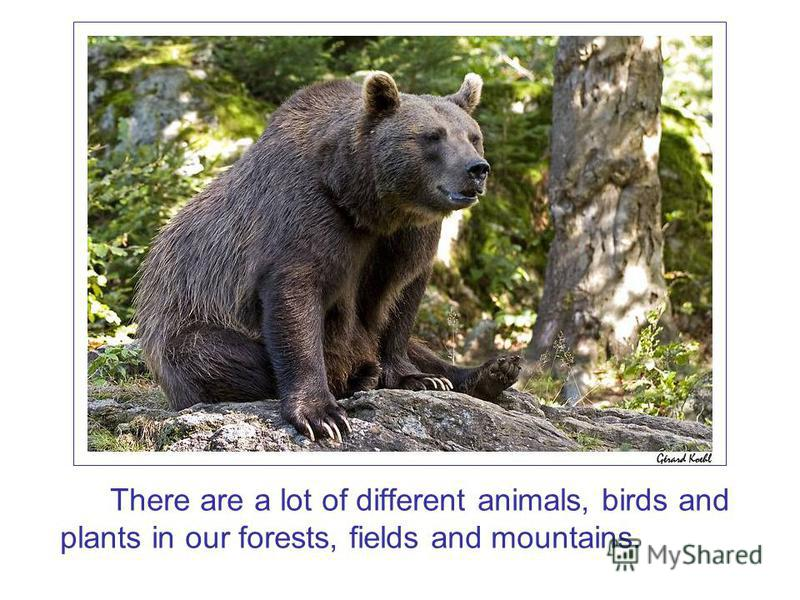 There are a lot of different animals, birds and plants in our forests, fields and mountains.