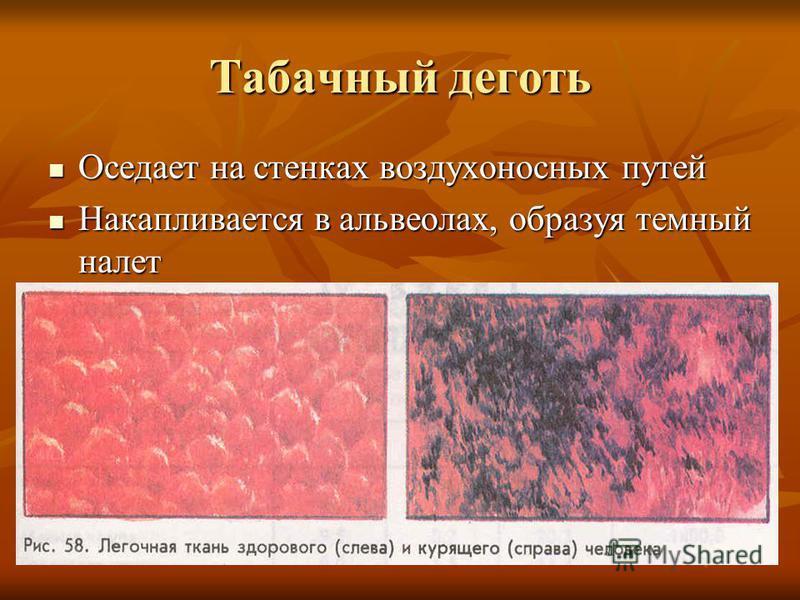 Табачный деготь Оседает на стенках воздухоносных путей Оседает на стенках воздухоносных путей Накапливается в альвеолах, образуя темный налет Накапливается в альвеолах, образуя темный налет