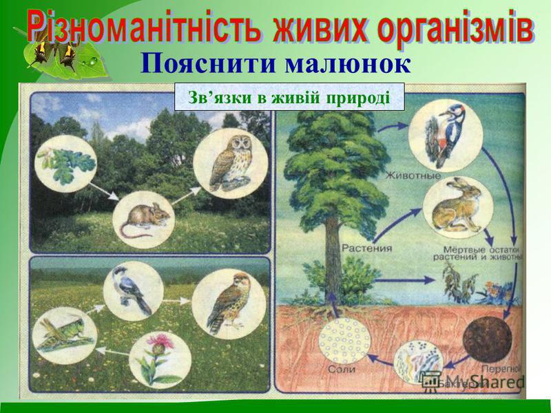 Пояснити малюнок Звязки в живій природі