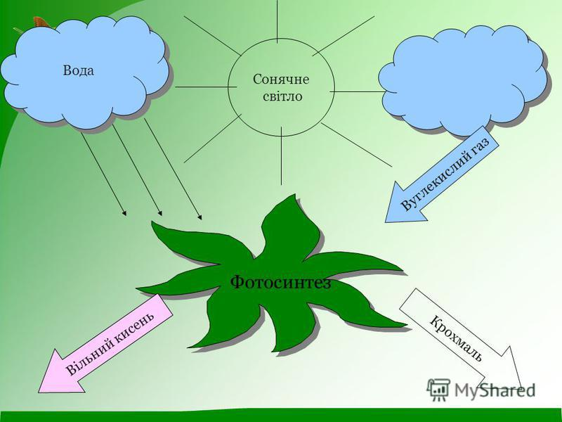 Сонячне світло Фотосинтез Вода Вуглекислий газ Крохмаль Вільний кисень
