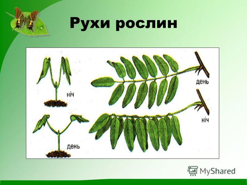 Рухи рослин