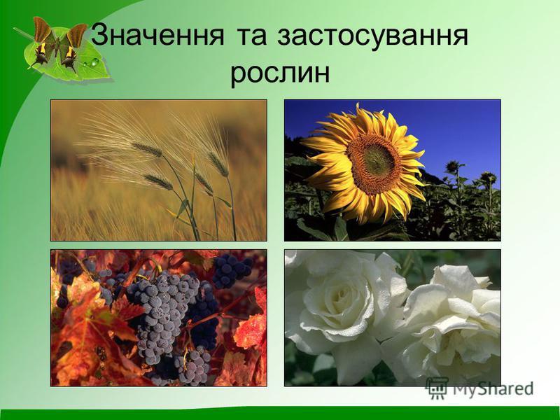 Значення та застосування рослин