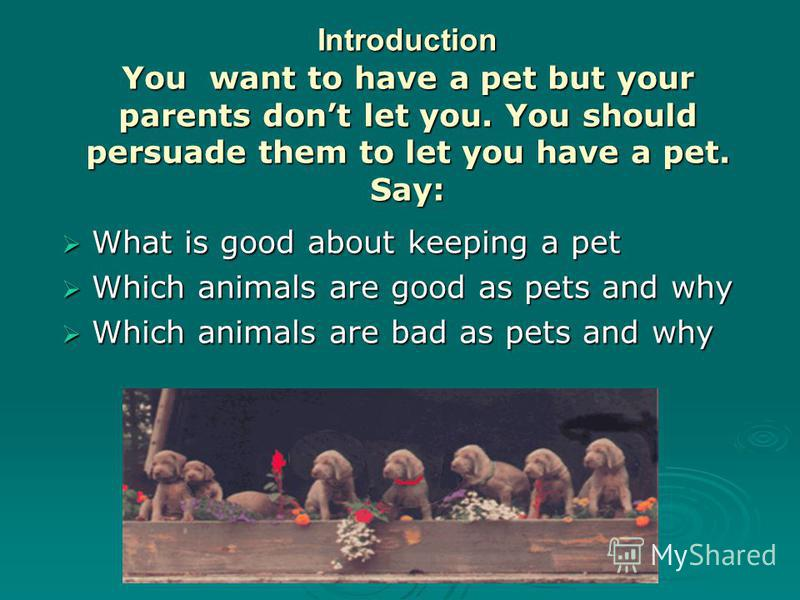 Introduction You want to have a pet but your parents dont let you. You should persuade them to let you have a pet. Say: What is good about keeping a pet What is good about keeping a pet Which animals are good as pets and why Which animals are good as