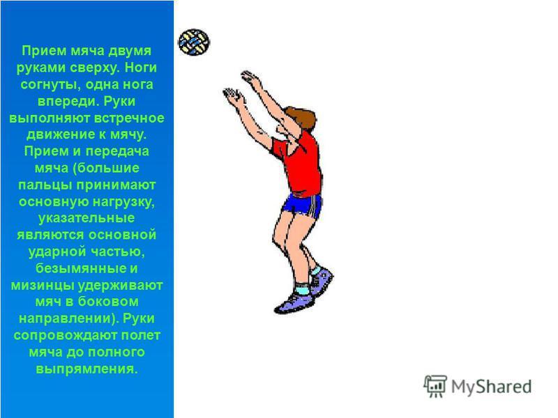 Нижняя прямая подача. Игрок стоит лицом к сетке, туловище наклонено вперед, ноги согнуты, левая нога впереди. Мяч на левой руке, рука чуть согнута и на уровне пояса. Мяч подбрасывается на 20- 30 см. При замахе рука отводится строго назад, удар по мяч