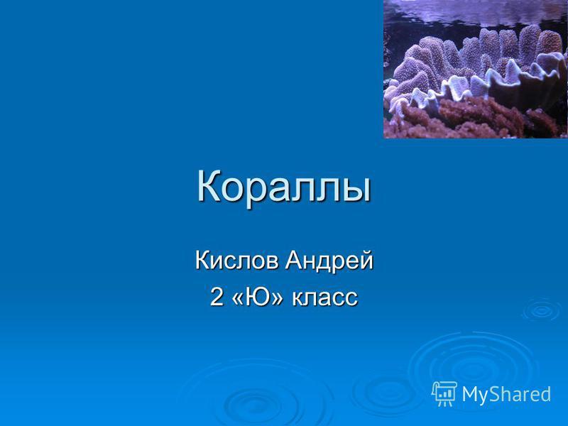 Кораллы Кислов Андрей 2 «Ю» класс