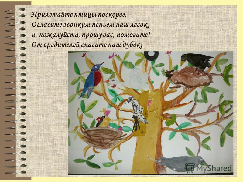 Прилетайте птицы поскорее, Огласите звонким пеньем наш лесок, и, пожалуйста, прошу вас, помогите! От вредителей спасите наш дубок!