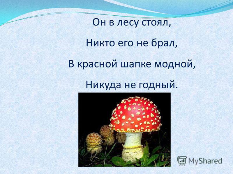 Он в лесу стоял, Никто его не брал, В красной шапке модной, Никуда не годный.