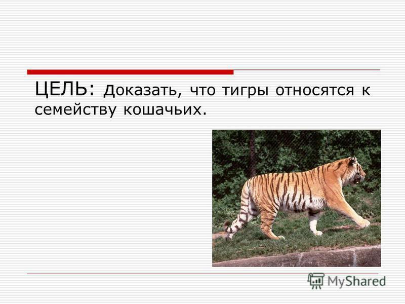 ЦЕЛЬ: д оказать, что тигры относятся к семейству кошачьих.