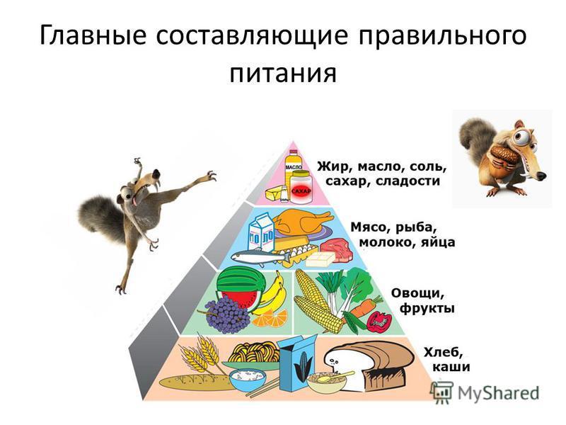 Главные составляющие правильного питания