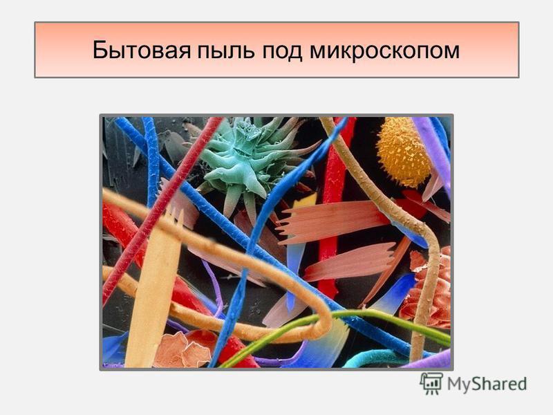 Бытовая пыль под микроскопом