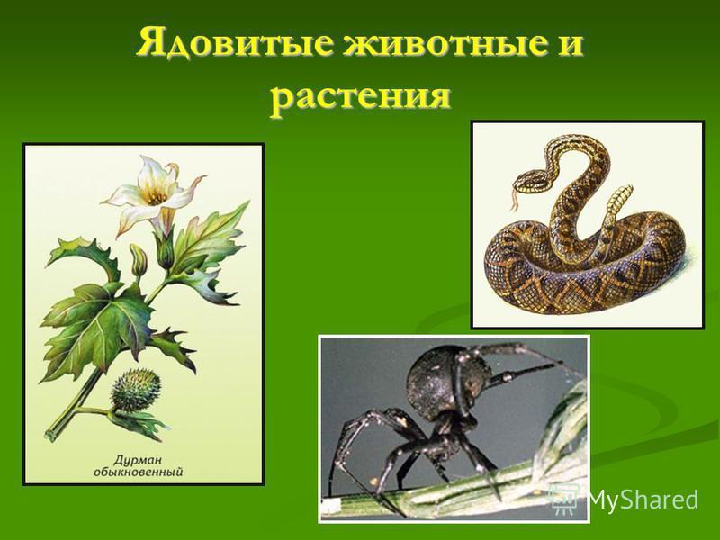 Ядовитые животные и растения