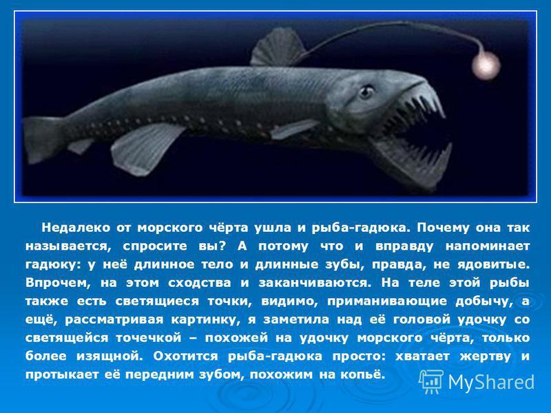 Недалеко от морского чёрта ушла и рыба-гадюка. Почему она так называется, спросите вы? А потому что и вправду напоминает гадюку: у неё длинное тело и длинные зубы, правда, не ядовитые. Впрочем, на этом сходства и заканчиваются. На теле этой рыбы такж