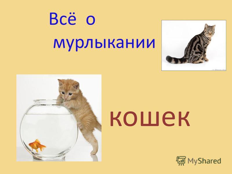 Всё о мурлыкании кошек