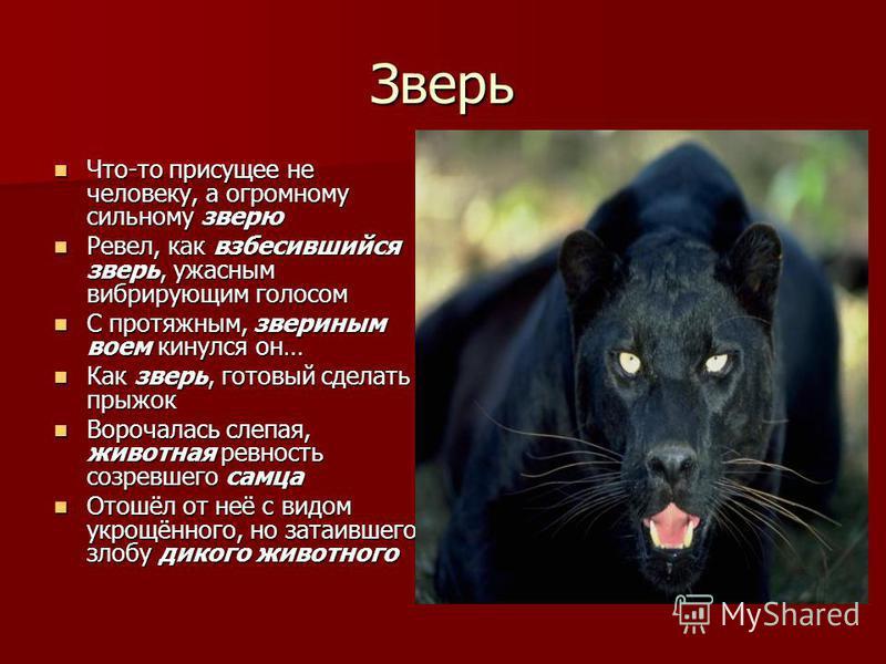 Зверь Что-то присущее не человеку, а огромному сильному зверю Что-то присущее не человеку, а огромному сильному зверю Ревел, как взбесившийся зверь, ужасным вибрирующим голосом Ревел, как взбесившийся зверь, ужасным вибрирующим голосом С протяжным, з