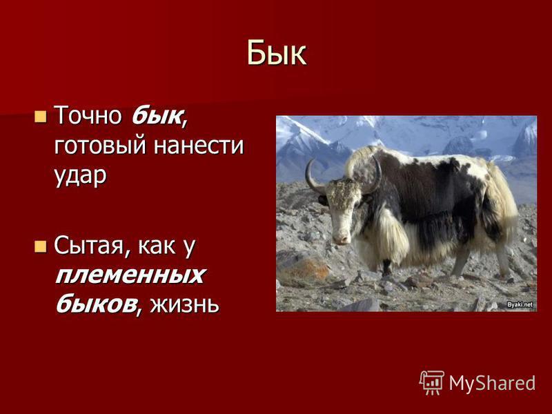 Бык Точно бык, готовый нанести удар Точно бык, готовый нанести удар Сытая, как у племенных быков, жизнь Сытая, как у племенных быков, жизнь