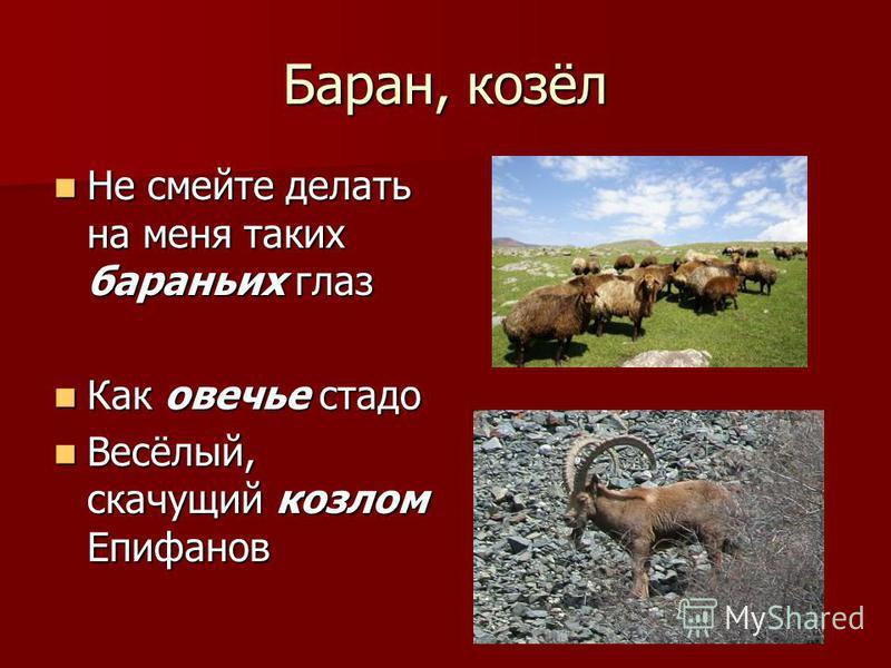 Баран, козёл Не смейте делать на меня таких бараньих глаз Не смейте делать на меня таких бараньих глаз Как овечье стадо Как овечье стадо Весёлый, скачущий козлом Епифанов Весёлый, скачущий козлом Епифанов