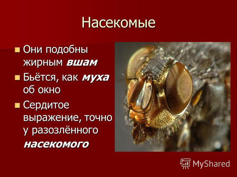 Насекомые Они подобны жирным вшам Они подобны жирным вшам Бьётся, как муха об окно Бьётся, как муха об окно Сердитое выражение, точно у разозлённого насекомого Сердитое выражение, точно у разозлённого насекомого
