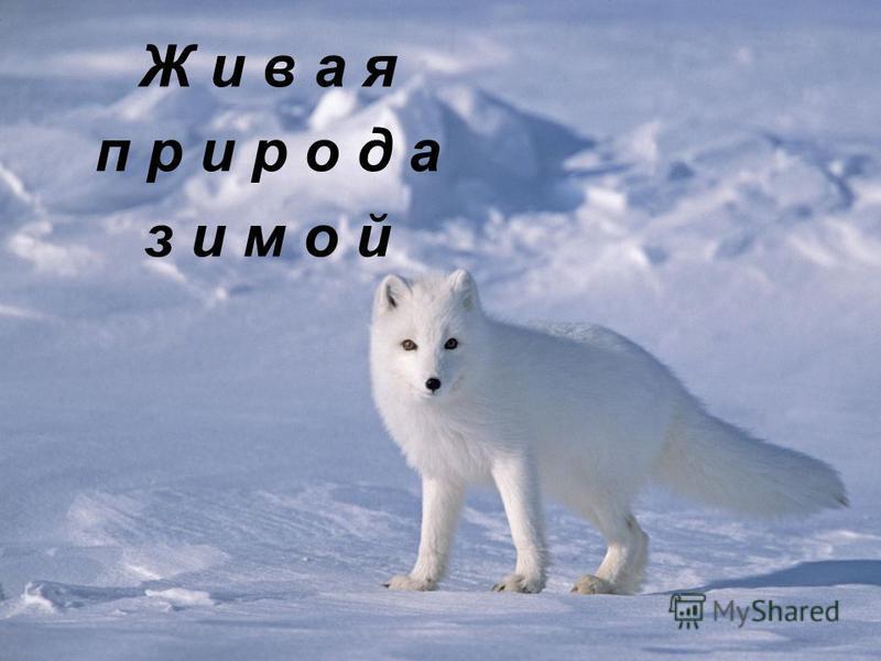 Ж и в а я п р и р о д а зимой