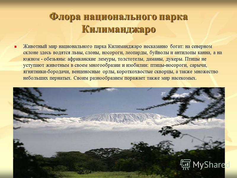 Флора национального парка Килиманджаро Животный мир национального парка Килиманджаро несказанно богат: на северном склоне здесь водятся львы, слоны, носороги, леопарды, буйволы и антилопы канна, а на южном - обезьяны: африканские лемуры, толстотелы,