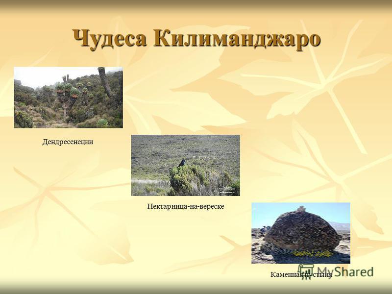 Чудеса Килиманджаро Дендресенеции Каменная пустыня Нектарница-на-вереске