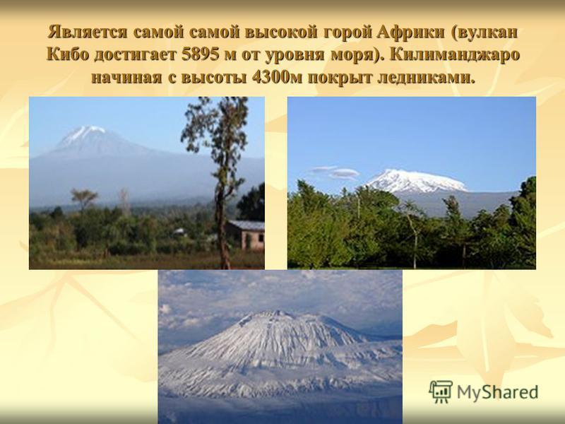 Является самой самой высокой горой Африки (вулкан Кибо достигает 5895 м от уровня моря). Килиманджаро начиная с высоты 4300 м покрыт ледниками.