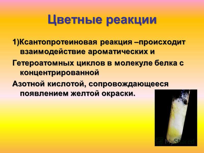 Цветные реакции 1)Ксантопротеиновая реакция –происходит взаимодействие ароматических и Гетероатомных циклов в молекуле белка с концентрированной Азотной кислотой, сопровождающееся появлением желтой окраски.
