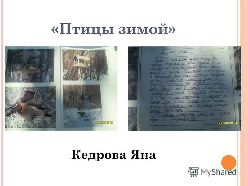 «Птицы зимой» Кедрова Яна