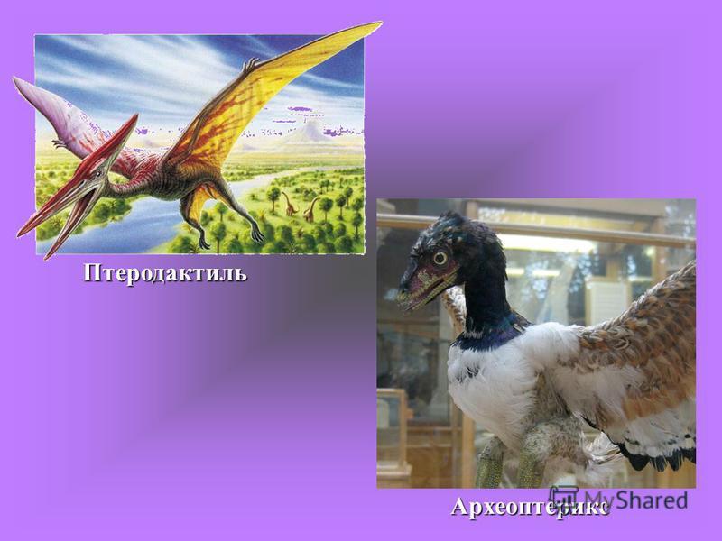 Птеродактиль Археоптерикс