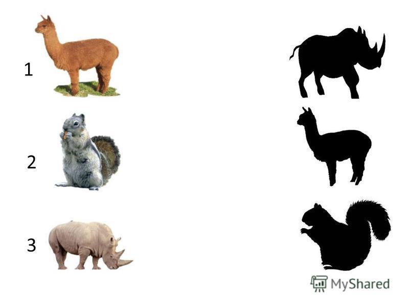 Задание По порядку, начиная с первого животного, нужно найти его силуэт во втором столбце, и кликнуть по нему левой кнопкой мышки.