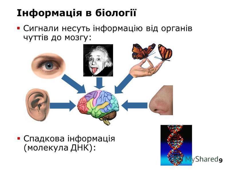 9 Інформація в біології Сигнали несуть інформацію від органів чуттів до мозгу: Спадкова інформація (молекула ДНК):