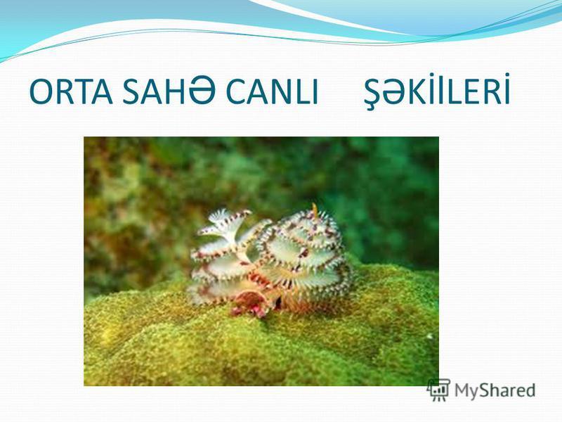 ORTA SAH Ə CANLI ŞƏKİ l LERİ