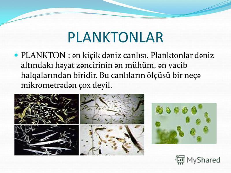 PLANKTONLAR PLANKTON ; ə n kiçik d ə niz canlısı. Planktonlar d ə niz altındakı h ə yat z ə ncirinin ə n mühüm, ə n vacib halqalarından biridir. Bu canlıların ölçüsü bir neç ə mikrometr ə d ə n çox deyil.