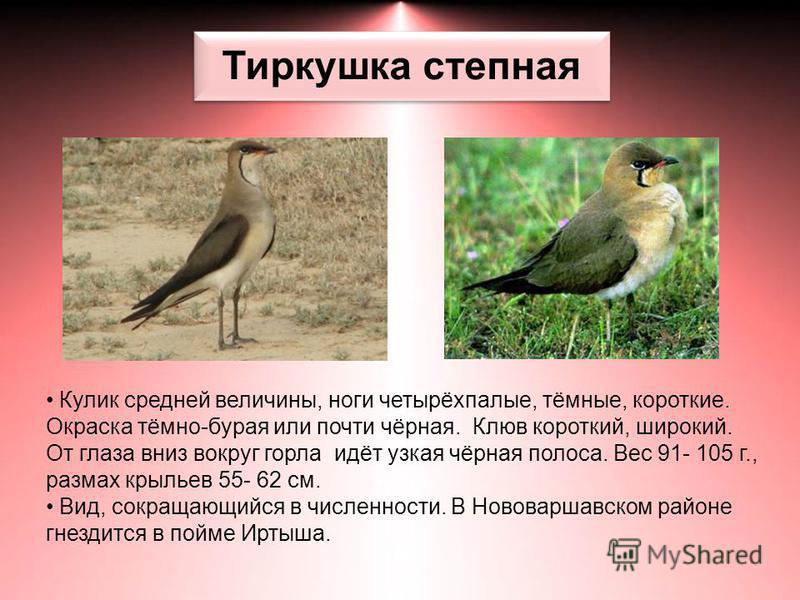 Тиркушка степная Кулик средней величины, ноги четырёхпалые, тёмные, короткие. Окраска тёмно-бурая или почти чёрная. Клюв короткий, широкий. От глаза вниз вокруг горла идёт узкая чёрная полоса. Вес 91- 105 г., размах крыльев 55- 62 см. Вид, сокращающи
