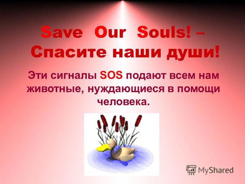 Save Our Souls! – Спасите наши души! Эти сигналы SOS подают всем нам животные, нуждающиеся в помощи человека.