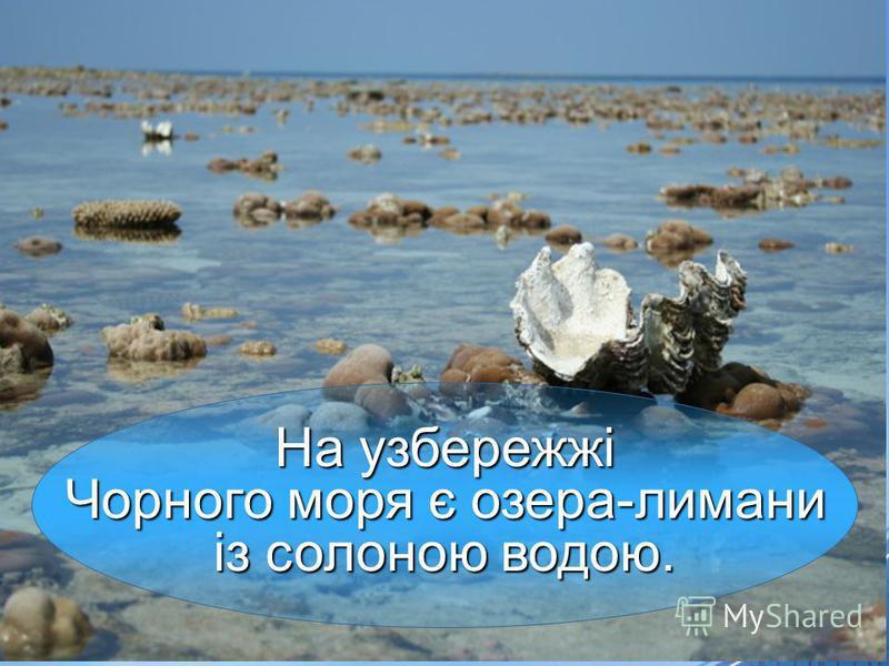 На узбережжі Чорного моря є озера-лимани Чорного моря є озера-лимани із солоною водою.
