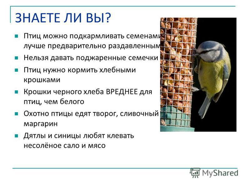 ЗНАЕТЕ ЛИ ВЫ? Птиц можно подкармливать семенами лучше предварительно раздавленными Нельзя давать поджаренные семечки Птиц нужно кормить хлебными крошками Крошки черного хлеба ВРЕДНЕЕ для птиц, чем белого Охотно птицы едят творог, сливочный маргарин Д
