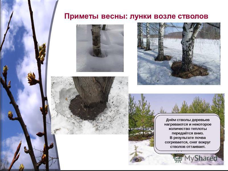 Приметы весны: лунки возле стволов