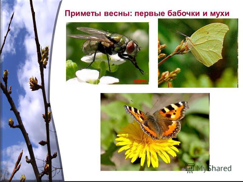 Приметы весны: первые бабочки и мухи