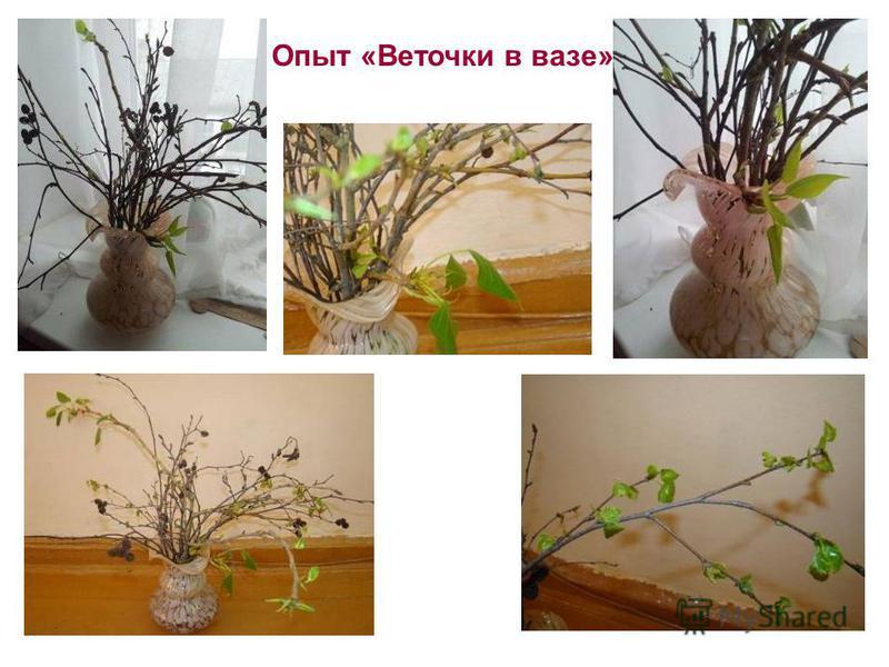Опыт «Веточки в вазе»