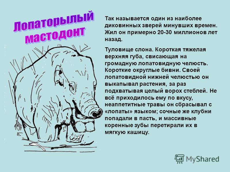 Так называется один из наиболее диковинных зверей минувших времен. Жил он примерно 20-30 миллионов лет назад. Туловище слона. Короткая тяжелая верхняя губа, свисающая на громадную лопатовидную челюсть. Короткие округлые бивни. Своей лопатовидной нижн