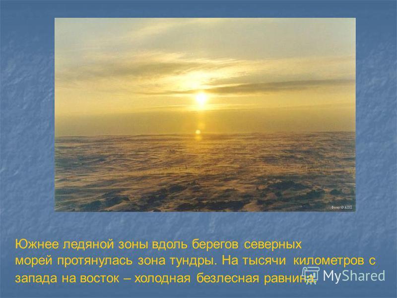Южнее ледяной зоны вдоль берегов северных морей протянулась зона тундры. На тысячи километров с запада на восток – холодная безлесная равнина.