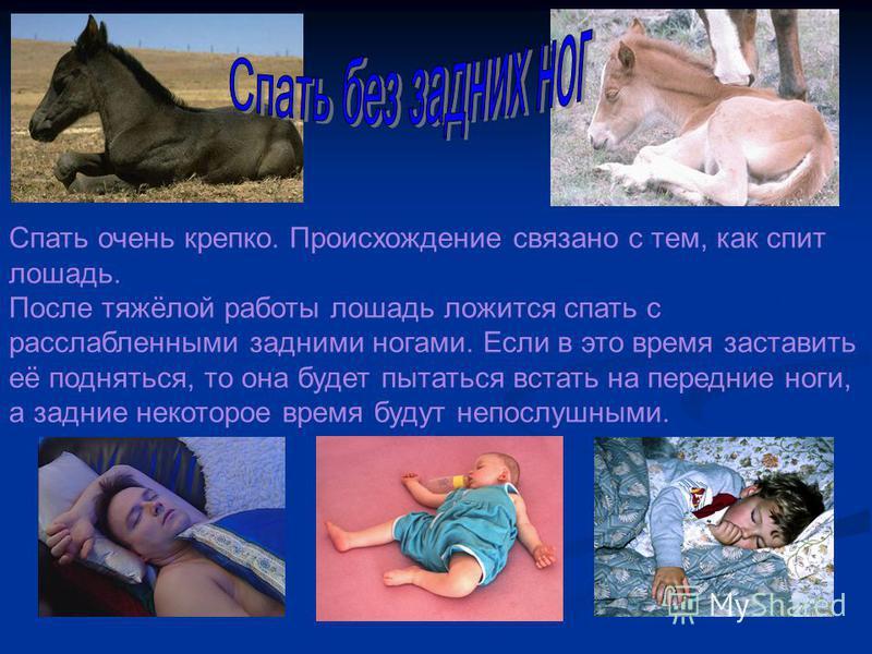 Спать очень крепко. Происхождение связано с тем, как спит лошадь. После тяжёлой работы лошадь ложится спать с расслабленными задними ногами. Если в это время заставить её подняться, то она будет пытаться встать на передние ноги, а задние некоторое вр