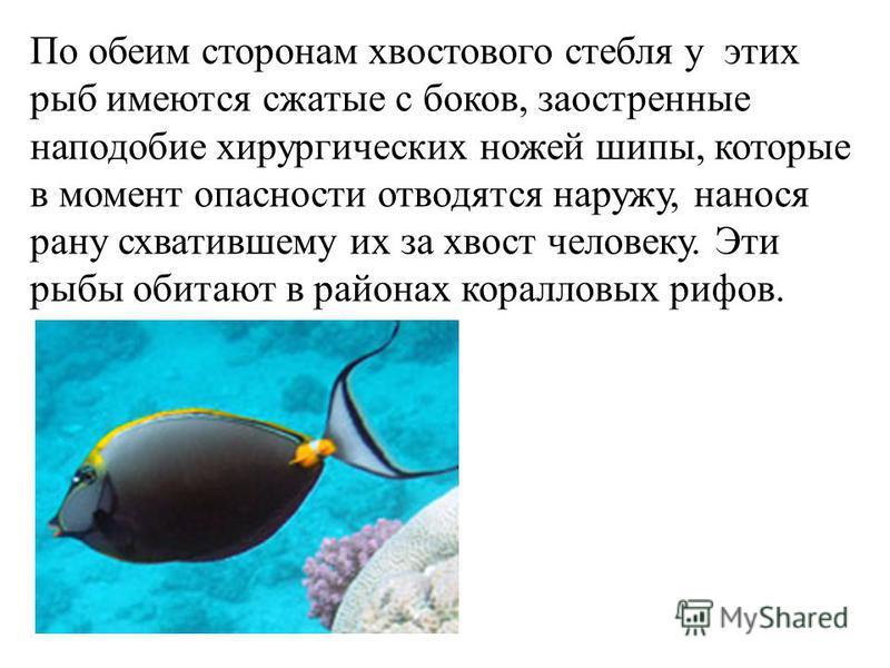 По обеим сторонам хвостового стебля у этих рыб имеются сжатые с боков, заостренные наподобие хирургических ножей шипы, которые в момент опасности отводятся наружу, нанося рану схватившему их за хвост человеку. Эти рыбы обитают в районах коралловых ри