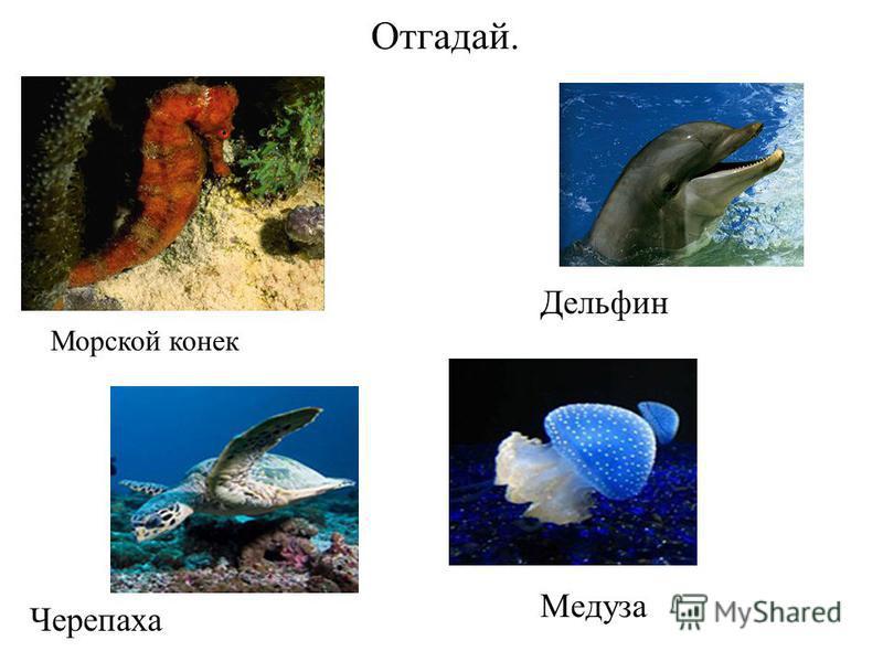 Отгадай. Морской конек Дельфин Черепаха Медуза