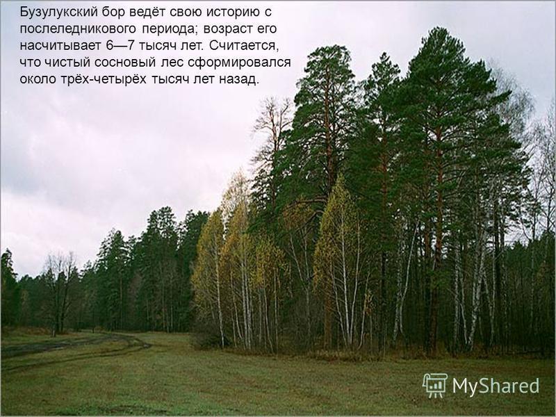 Бузулукский бор ведёт свою историю с послеледникового периода; возраст его насчитывает 67 тысяч лет. Считается, что чистый сосновый лес сформировался около трёх-четырёх тысяч лет назад.