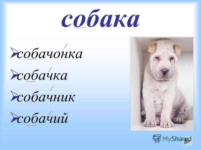 собака собачонка собачка собачник собачий