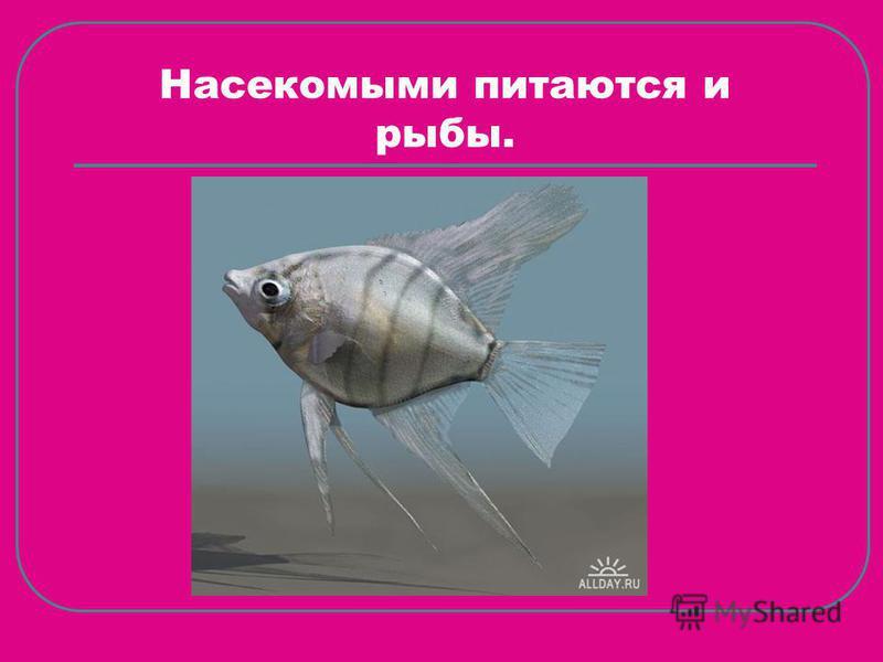 Насекомыми питаются и рыбы.
